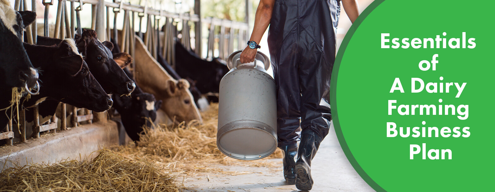 Essentials of A Dairy Farming Business Plan