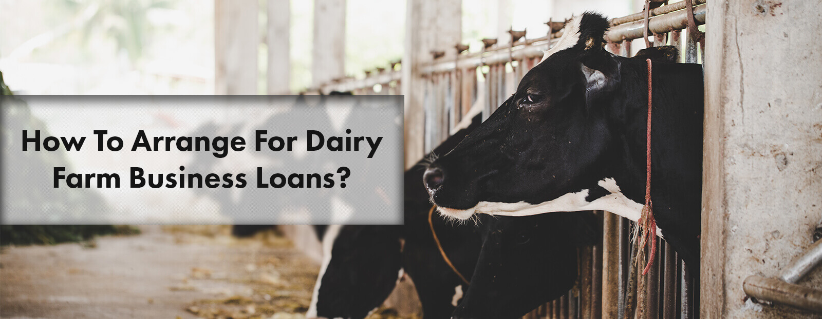 How To Arrange For Dairy Farm Business Loans?