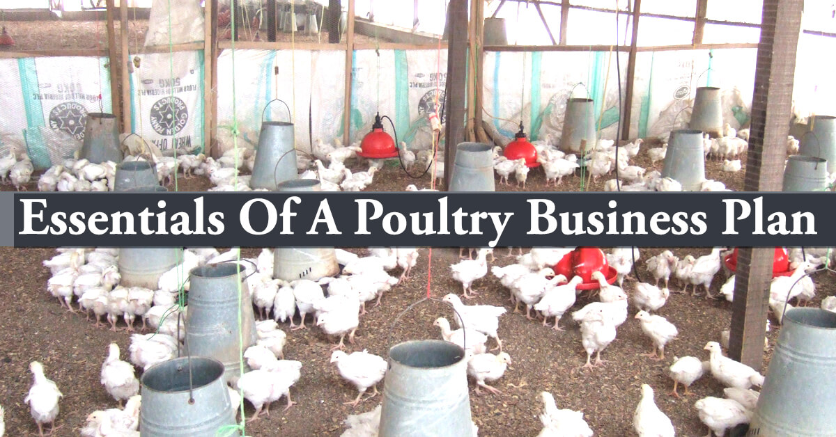 poultry farming business plan