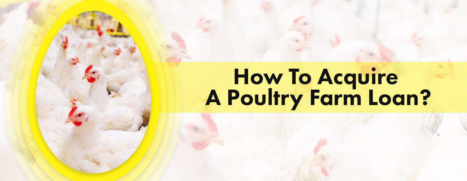 How To Acquire A Poultry Farm Loan?