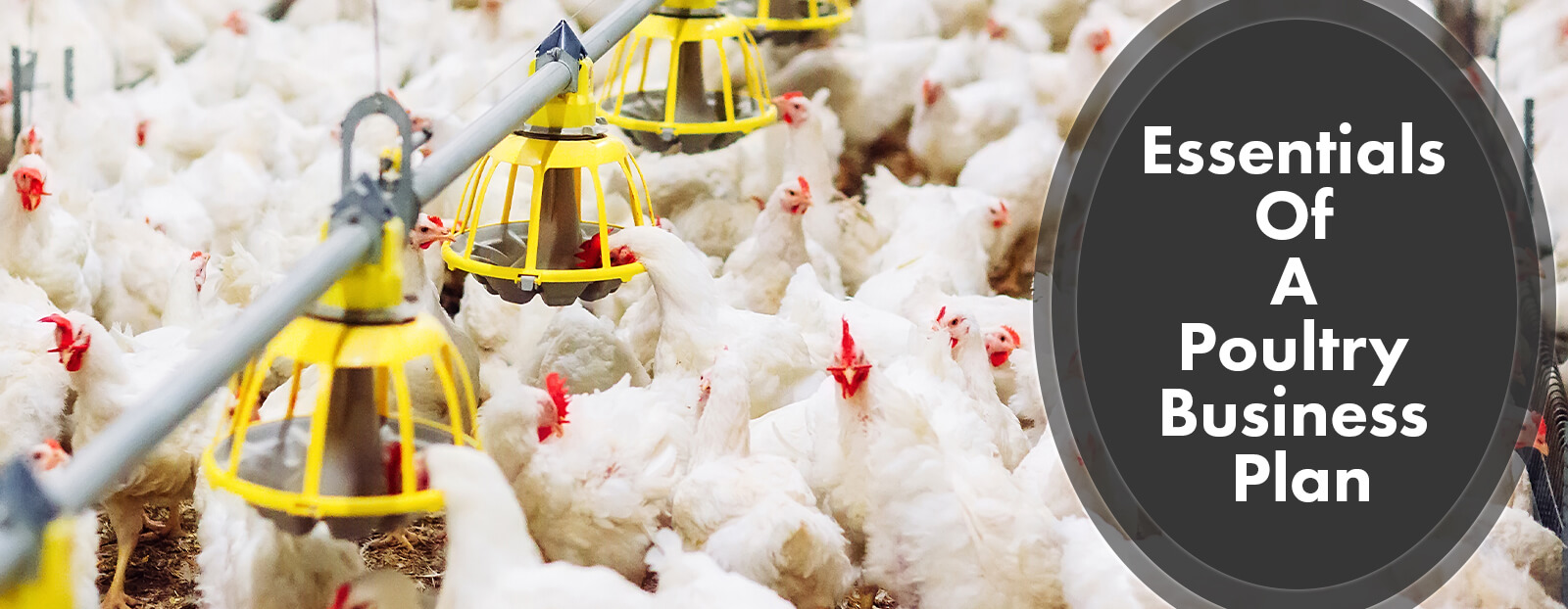 Essentials Of A Poultry Farming Business Plan