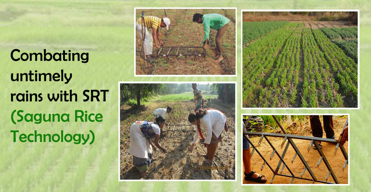 Combating untimely rains with SRT